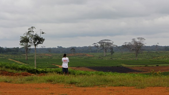 Looking out over a new oil palm plantation in Liberia. Credit: Dan Klotz