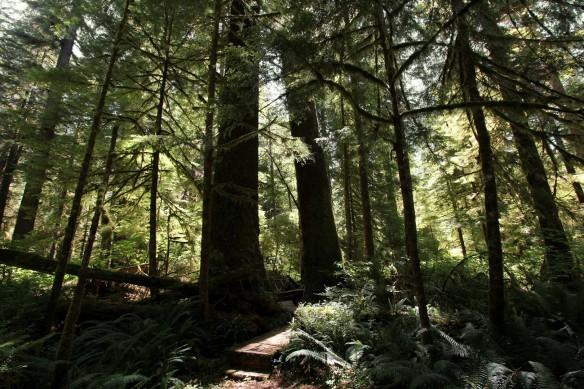 British Columbia's Carmanah Walbran Provincial Park on Vancouver Island. Credit: Dan Klotz.